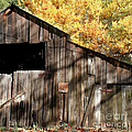 Old Barn In Autumn by Art Block Collections