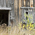 Old Barn In Fall Maine by Keith Webber Jr