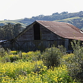 Old Barn In Sonoma California 5d22232 by Wingsdomain Art and Photography
