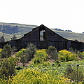 Old Barn In Sonoma California 5d22235 by Wingsdomain Art and Photography