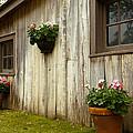Old Barn Side by Susie Hoffpauir