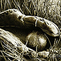 Old Baseball Glove With Ball In The Grass by Sandra Cunningham