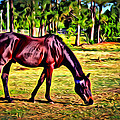 Old Bay Horse by Alice Gipson