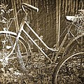 Old Bikes by Laurie Perry
