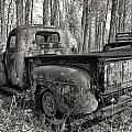 Old Blue In Sepia by Cindy Archbell