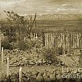 Old Boothill Cemetery by John Malone
