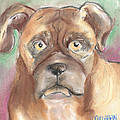 Old Boxer by Christine Callahan