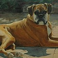 Old Boxer by Pet Whimsy  Portraits
