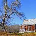 Old Cabin And Tree by Duane McCullough