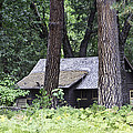 Old Cabin by Brian Williamson