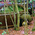 Old Car In The Woods by Chuck  Hicks