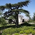 Old Cedar At Chateau Amboise by Christiane Schulze Art And Photography