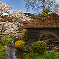 Old Cherry Blossom Water Mill by Sebastian Musial