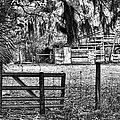 Old Chisolm Island Barn by Scott Hansen