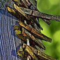 Old Clothes Pins I by Debbie Portwood
