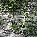 Old Coquina Wall by Rich Franco