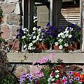 Old Cottage Flowers by Jessica Davis