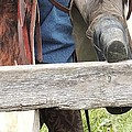 Old Cowboy by Todd Sherlock