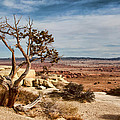 Old Desert Cypress Struggles To Survive by Michael Flood