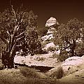 Old Desert Tree Number Three by Holly Storz