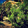 Old Desert Tree Number Two by Holly Storz