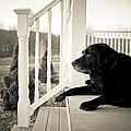 Old Dog On A Front Porch by Diane Diederich