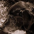 Old Dog by Paul Wilford