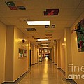 Clare Elementary School Hall by Terri Gostola
