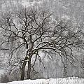 Old Elm by Joshua McCullough