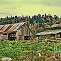 Old Farm by Dawn Harris
