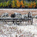 Old Farm Rake by Dave Mills