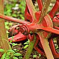 Old Farm Tractor Wheel by Carolyn Marshall