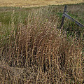 Old Fence Line by Donald S Hall