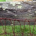 Old Fence by Richard Lent