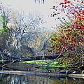Old Florida Along The Sante Fe River by Barbara Bowen