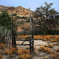 Old Gate At Oak Flats by Tom Janca