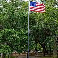 Old Glory High And Proud by Sennie Pierson