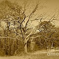 Old Haunted Tree In Sepia by Chris W Photography AKA Christian Wilson