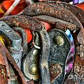 Old Horse Shoes by Doc Braham
