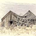 Old House by Dianne Phelps