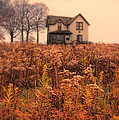 Old House In Weeds by Jill Battaglia