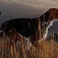Old Hunting Dog by Daniel Eskridge