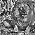 Old King In Black And White by SC Heffner