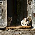 Old Knox Church Cats by Nikolyn McDonald