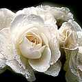 Old Lace Rose Bouquet by Jennie Marie Schell
