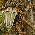 Old Lamp Hanging On Tree  by Leyla Ismet