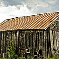 Old Maine Barn by Alana Ranney
