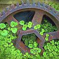 Old Mill Of Guiford Grinding Gear by Sandi OReilly