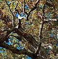 Old Oak by Joseph Yarbrough