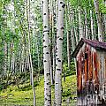 Old Outhouse Among Aspens by Lincoln Rogers